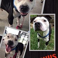 Adopt A Pet :: Bocephus - St. Francisville, LA