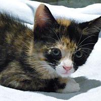 Adopt A Pet :: Cappucine - Toronto, ON