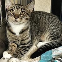Adopt A Pet :: Lily - Riverside, CA