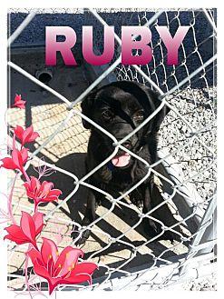 Labrador Retriever Mix Puppy for adoption in Donaldsonville, Louisiana - Ruby