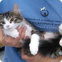 Adopt A Pet :: Tiana - Sterling Hgts, MI