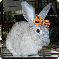 Adopt A Pet :: Shiloh - Williston, FL