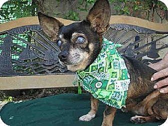 Mixed Breed (Small)/Mixed Breed (Small) Mix Dog for adoption in Creston, California - Chloe
