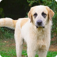 Adopt A Pet :: *Rocky - PENDING - Westport, CT