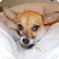 Adopt A Pet :: Maria - Gainesville, FL