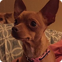 Adopt A Pet :: Mama Pixie - College Station, TX