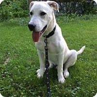 Adopt A Pet :: Leonardo - New Oxford, PA