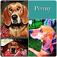Adopt A Pet :: Penny-ADOPTED - Ontario, ON