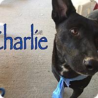 Adopt A Pet :: Charlie - Byhalia, MS
