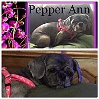 Adopt A Pet :: PEPPER ANN - Lawton, OK