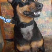 Adopt A Pet :: Toby - Yucaipa, CA