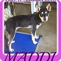 Husky Mix Dog for adoption in Allentown, Pennsylvania - MADDI