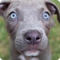 Adopt A Pet :: Chunk - Broken Arrow, OK