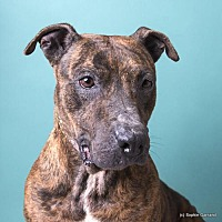 Adopt A Pet :: Reba - Anniston, AL