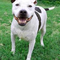 Adopt A Pet :: Buddy - Westampton, NJ