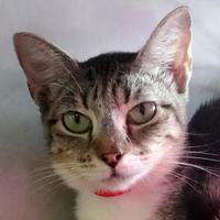 Adopt A Pet :: Widdle - Austin, TX