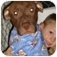 Photo 2 - American Staffordshire Terrier Mix Dog for adoption in East Rockaway, New York - Holly