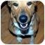 Photo 3 - Collie Mix Dog for adoption in Overland Park, Kansas - Sabine