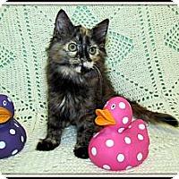 Adopt A Pet :: Avril - Orlando, FL