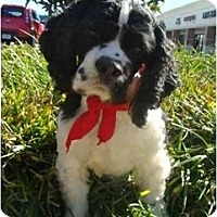 Adopt A Pet :: Colby - Sugarland, TX