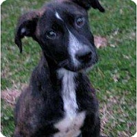 Adopt A Pet :: Stripe - Pittsbugh, PA