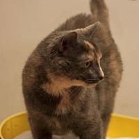 Adopt A Pet :: Sasha - Chaska, MN