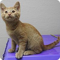 Adopt A Pet :: Buzz - Fort Wayne, IN