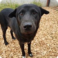 Adopt A Pet :: Lucky - Seattle, WA