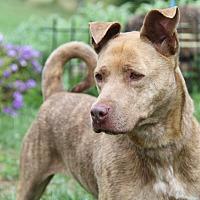 Adopt A Pet :: Smokey (Spayed)-New Photos - Marietta, OH