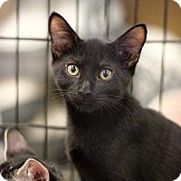 Adopt A Pet :: Bobbin - Richmond, VA