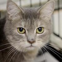 Adopt A Pet :: Smokey - Huntingdon, PA
