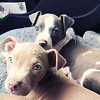 Adopt A Pet :: Margo - Wichita Falls, TX