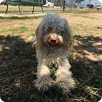 Adopt A Pet :: zephyr - Bakersfield, CA