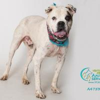 Adopt A Pet :: DIEGO - Camarillo, CA