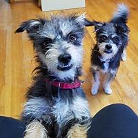 Adopt A Pet :: Hubert - Portland, OR