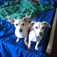 Adopt A Pet :: Tigger - Spartanburg, SC