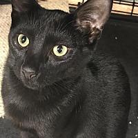 Adopt A Pet :: Cole - Furlong, PA