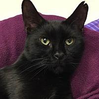 Adopt A Pet :: Elijah - Grayslake, IL