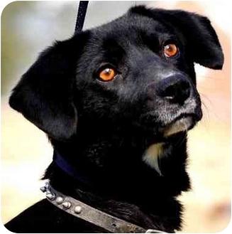 Labrador Retriever Mix Dog for adoption in Pawling, New York - MALLORY