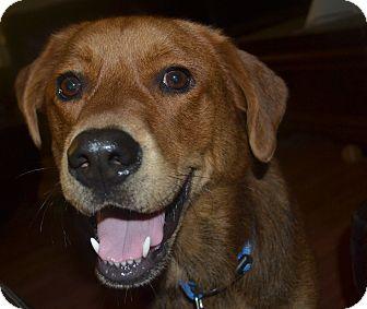 Labrador Retriever Mix Dog for adoption in Hamburg, Pennsylvania - Rylee