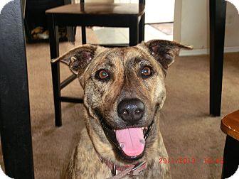 Basenji/Catahoula Leopard Dog Mix Dog for adoption in Brookshire, Texas - Curly