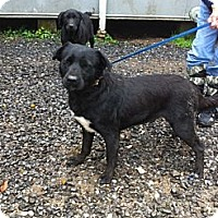 Labrador Retriever Mix Dog for adoption in Baton Rouge, Louisiana - Betty