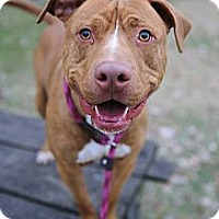 Adopt A Pet :: Flame - Chicago, IL