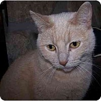 Adopt A Pet :: Christina - Sheboygan, WI