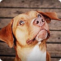Adopt A Pet :: Dupont - Albert Lea, MN