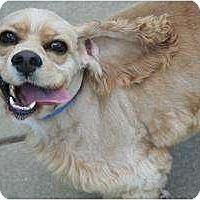 Adopt A Pet :: Bentley - Westfield, IN