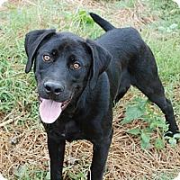 Adopt A Pet :: Tony - ADOPTION PENDING - Albany, NY