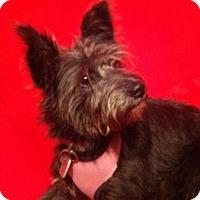 Adopt A Pet :: CiCi - Murphy, NC