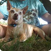 Adopt A Pet :: Buddie - Knoxville, TN
