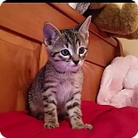 Adopt A Pet :: Ziggy - Monroe, NC